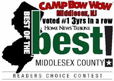 Camp Bow Wow Middlesex, NJ was voted #1 Best of the Best in Middlesex County 3yrs in a row in the Readers Choice Contest for Home News Tribune.
