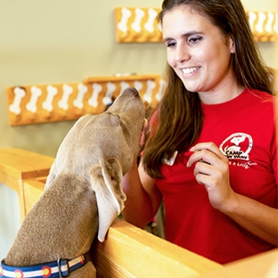 dog with Camp Bow Wow employee