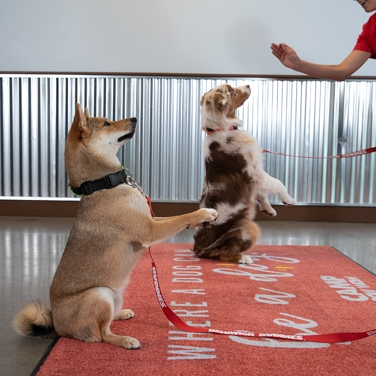 Dog training for socialization at Camp Bow Wow