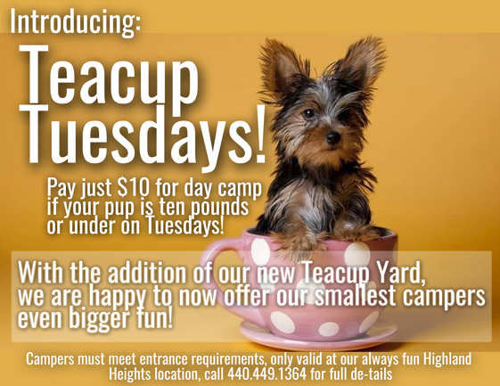 Teacup Tuesdays Special Offer