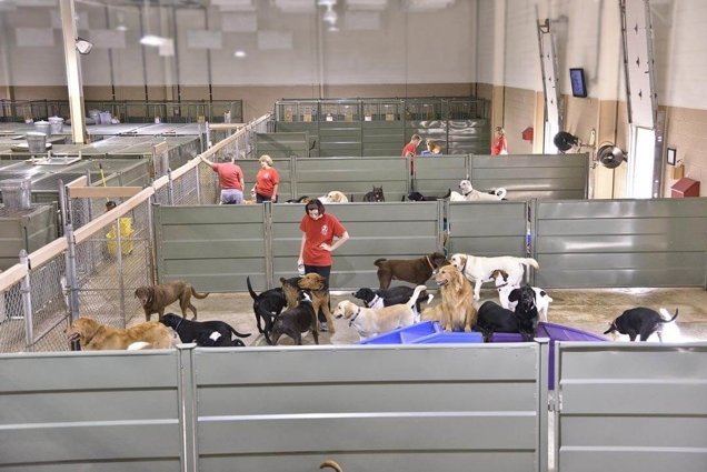James and Patti Daniel's Camps in North and South Carolina host about 70-80 dogs a day on average.