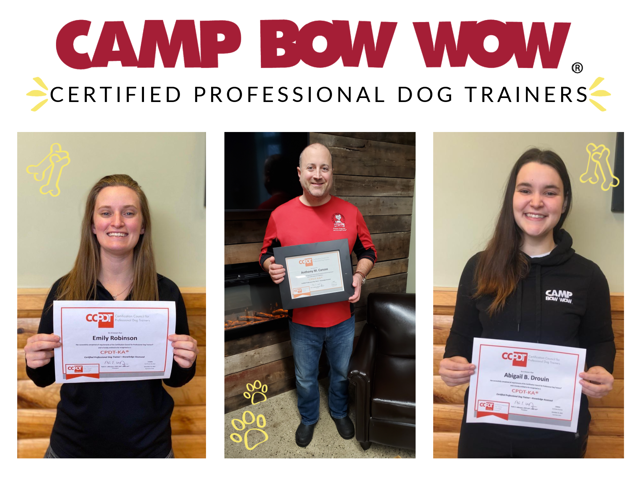 certified professional dog trainer