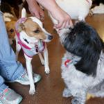 Sassy & Elvis enjoy lovins from their camp counselor!