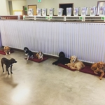 Small Dogs Lounging