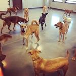 Pups at Camp!