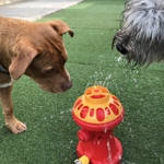 Fire Hydrant Fridays