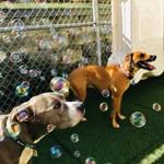 More bubble fun!