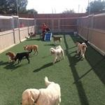 Three large outdoor play yards, each surfaced with artificial turf which is easy on your pup's paws.  We add shade sails and misters and even have small wading pools to help keep things cool during the hot summer.