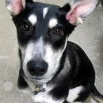 I'm all ears