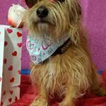 Valentine's Day Pawty