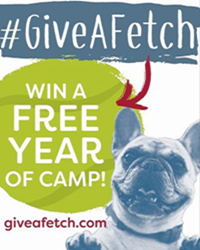 Win a Free Year of Camp