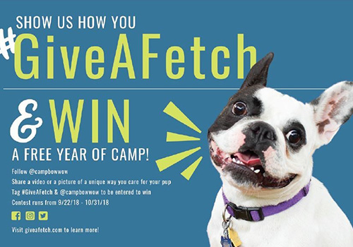 Give a Fetch and Win a Free Year of Camp