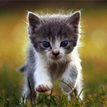 Kitten Running in the Grass