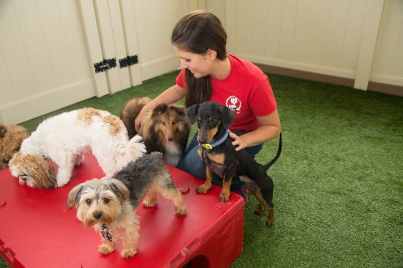 Camp Bow Wow Trainer with dogs