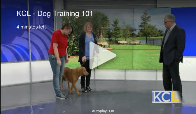 KCL Dog Training 101 Video Link