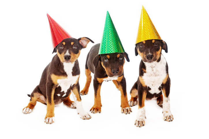 Puppies with birthday hats