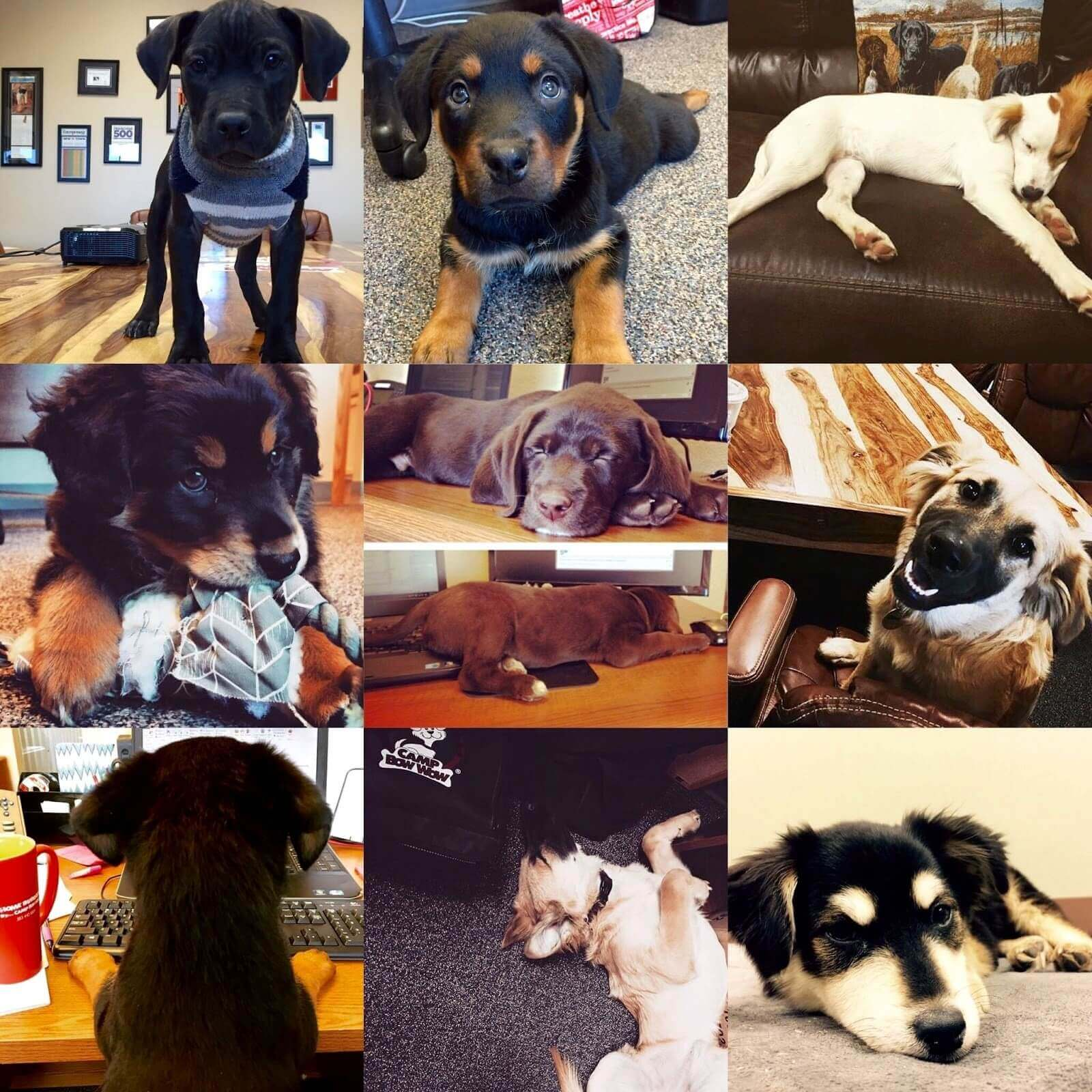 Puppies in collage