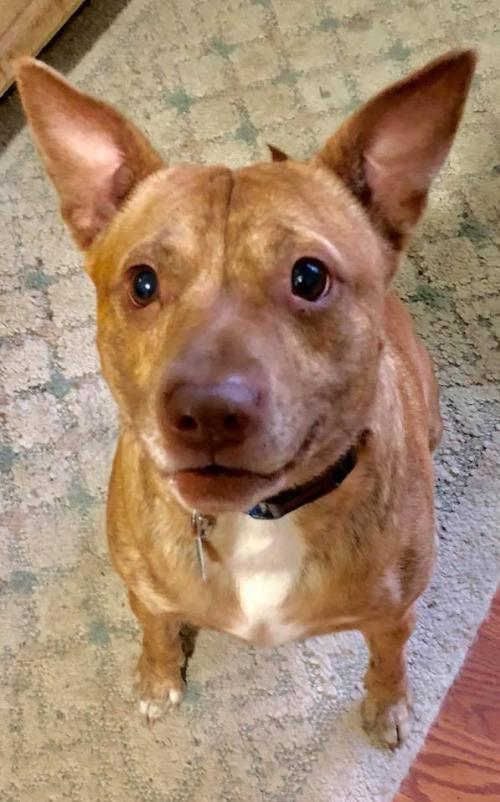 image of our foster dog Tevin